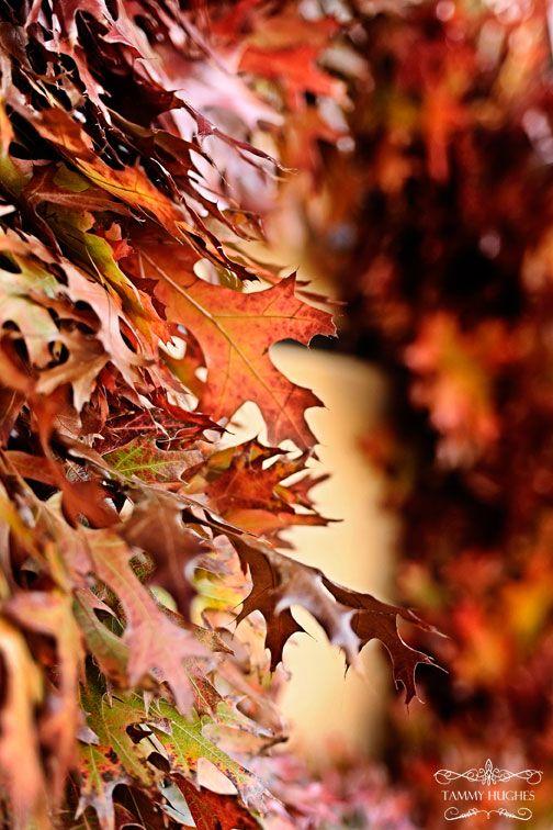 wreath of oak leaves, fall color