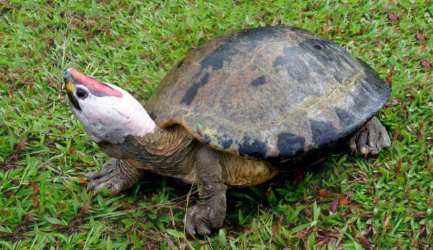 156 best tartaruga d 39 acqua dolce images on pinterest for Acqua tartarughe