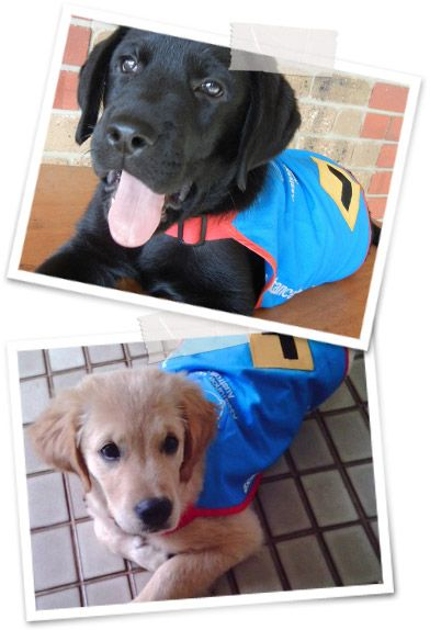 Assistance Dogs Australia.. The super pups..