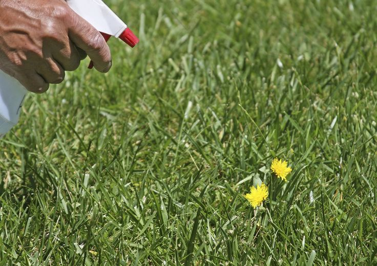10 Extraordinarily Handy Uses for White Vinegar... #4: Tackle Weeds- Spray unwanted plants or weeds with white vinegar. The acid acts as an eco-friendly herbicide, and will work to destroy the growth with just a few applications.