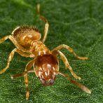 Cute Ameisen unter dem Rasen st ren Mit einem einfachen Trick lassen sich die Ameisen vertreiben Auch ein Hausmittel hilf beim Bek mpfen der Ameisen