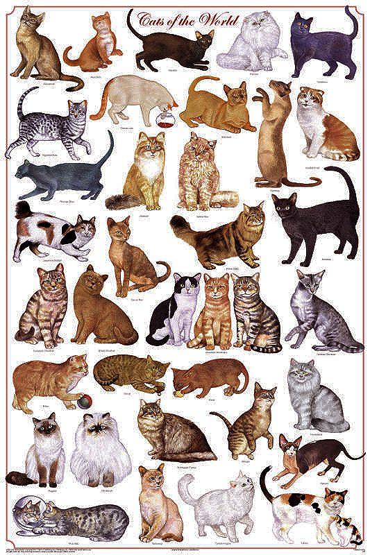 все кошачьи список с картинками сварена алюминия, наружи