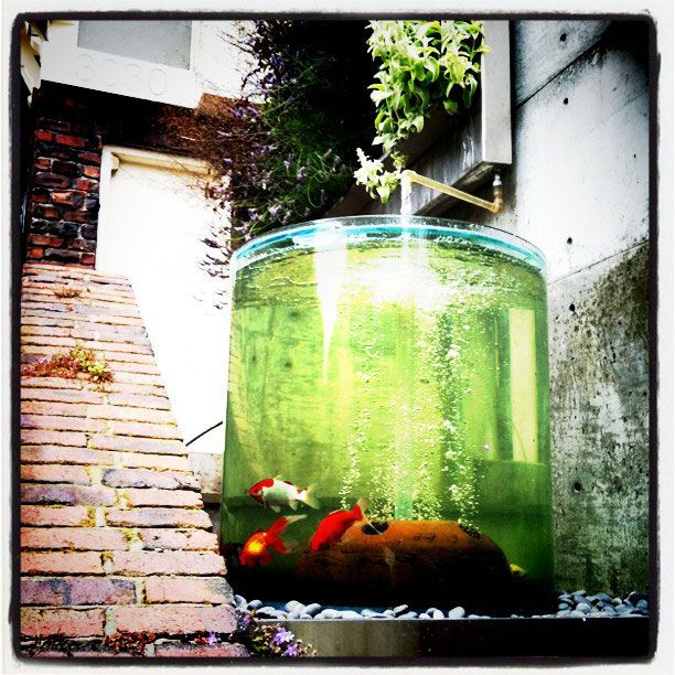 Outdoor fish pond garden water and plants pinterest for Outdoor tropical fish pond