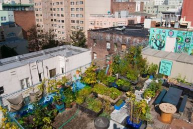 What is Urban Gardening? The Hot Trend That's Taking Over Cities
