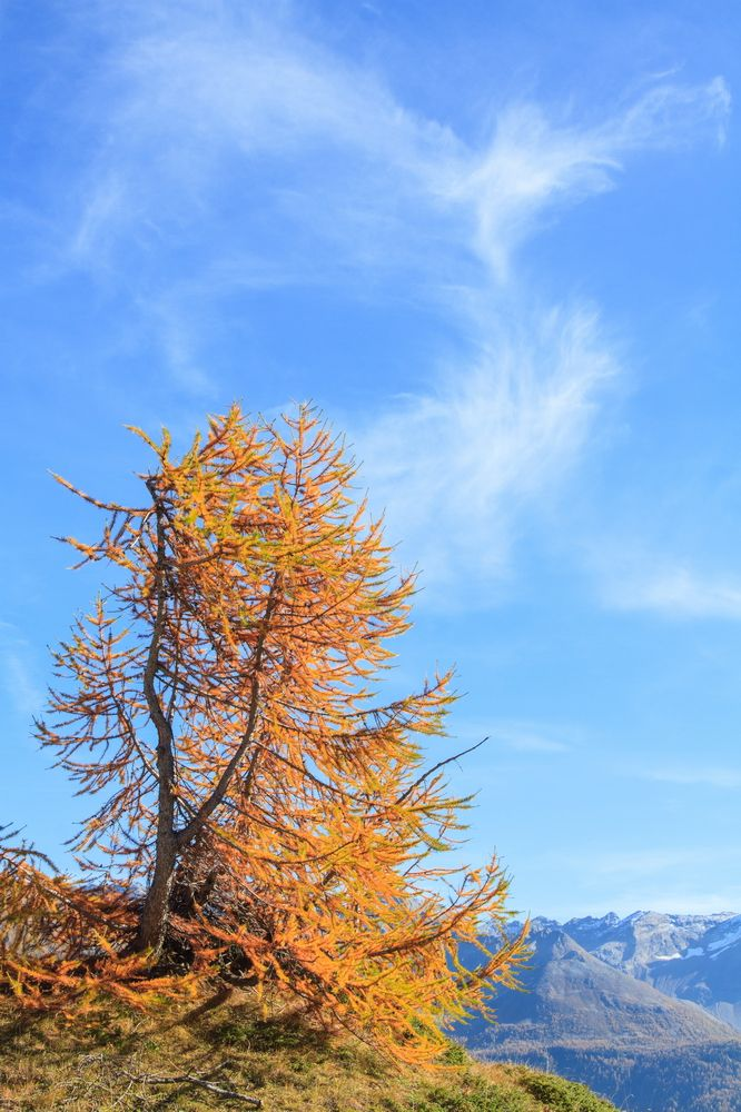 Larici in autunno in #Valtellina