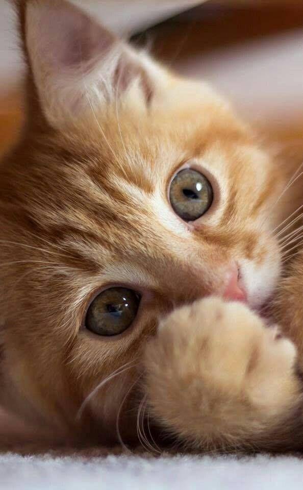 Pin Von Deanna Lea Auf Diy Ideas By Elisa Baby Katzen Haustiere Susse Tiere