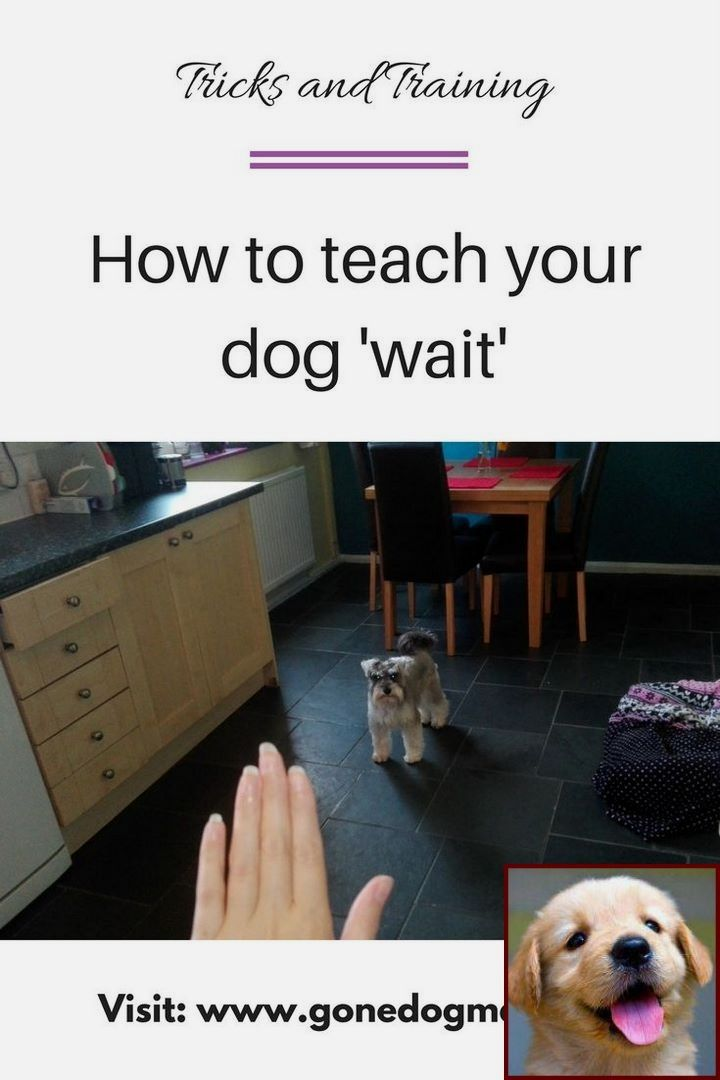 Potty Training Puppy Fail And Clicker Training Dogs Sit Dog