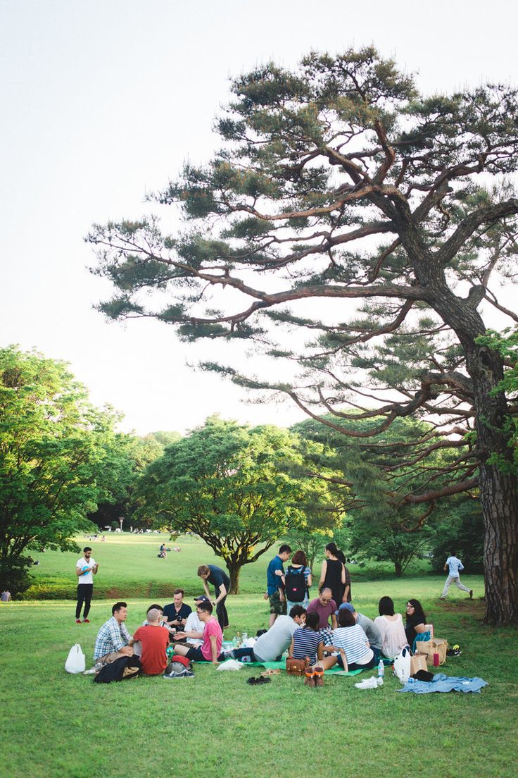 Picnic at Yoyogi Park