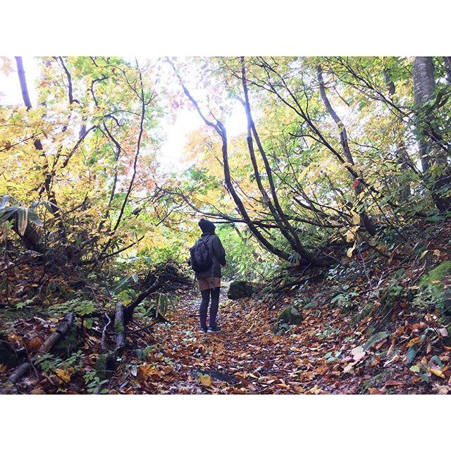 【inaka_rabbit_】さんのInstagramをピンしています。 《クアオルトの道! #クアオルト #自然 #秋 #紅葉 #山 #森林 #ハイキング #トレッキング #山形 #nature #autumn #mountain #forest #hiking #trekking #yamagata》