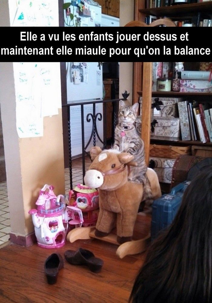 30 Snapchat de chats absolument hilarants