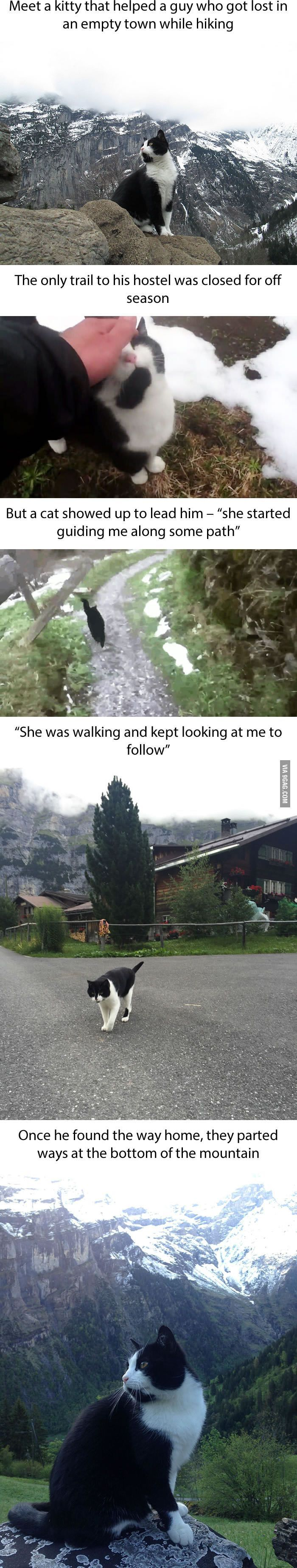 Heroic kitty! Man lost in mountains of Switzerland comes across a kitty who guides him to the nearby town. http://www.traveling-cats.com/2016/08/cat-from-gimmelwald-switzerland.html /