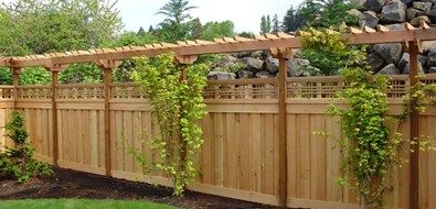 Could grow grapes on tall trellis to make more privacy.nothing at this link just picture idea.
