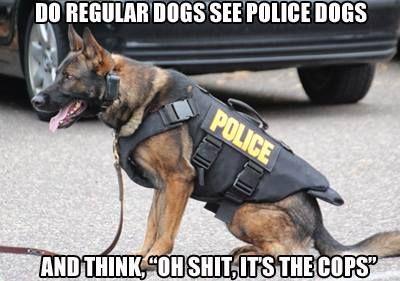 Police dog - http://funnyout.com/police-dog/