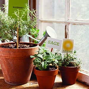 growing the herbs inside, perfect for wintertimeGreen Thumb, Indoor Herbs, Growing Herbs, Indoor Gardens, Herbs Gardens, Herbs Indoor, Herbs Inside, Indoor Plants,  Flowerpot