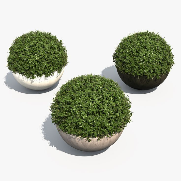 3d boxwood shrubs bubble pots model 3д модель растения самшит куст кустарник   plant box shrub pot garden topiary park bush nature foliage leaf landscape boxwood buxus architecture visualization exterior 3d rounded green set