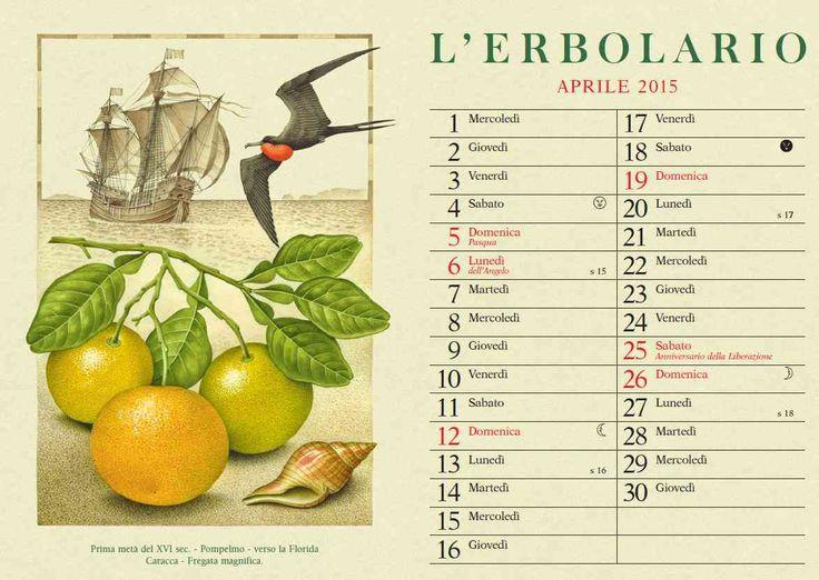In Aprile il nostro #viaggio virtuale prosegue verso la Florida dove i Pompelmi in fiore ci promettono i loro gustosi frutti... quanto è splendida la Fregata Magnifica in volo con la sua gola rosso carminio ben in mostra?   Buona giornata! http://ow.ly/L735d
