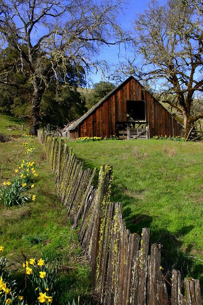 Photo by Betsy Maas. Great old barn off Hwy 20 near Willits, CA. | beautiful spring photo