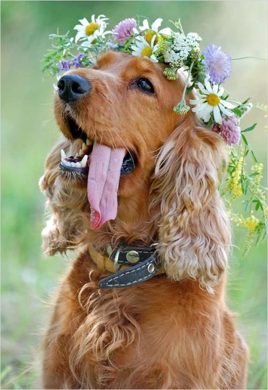 Wearable floral art at your wedding never looked so cute. A great way to include your furry friends.