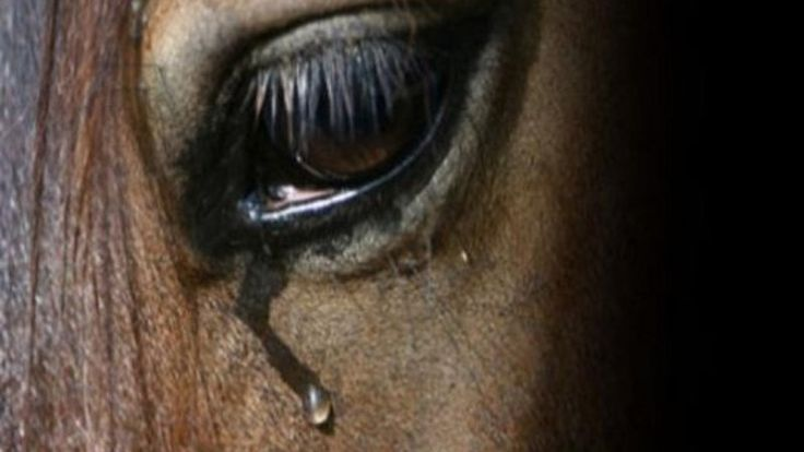 Petition · Leader, Liberal Party of Canada/Chef, Parti libéral du CanadaJustin Trudeau: Horse Barn BOARDING facilities FIRE PREVENTION REGULATIONS · Change.org