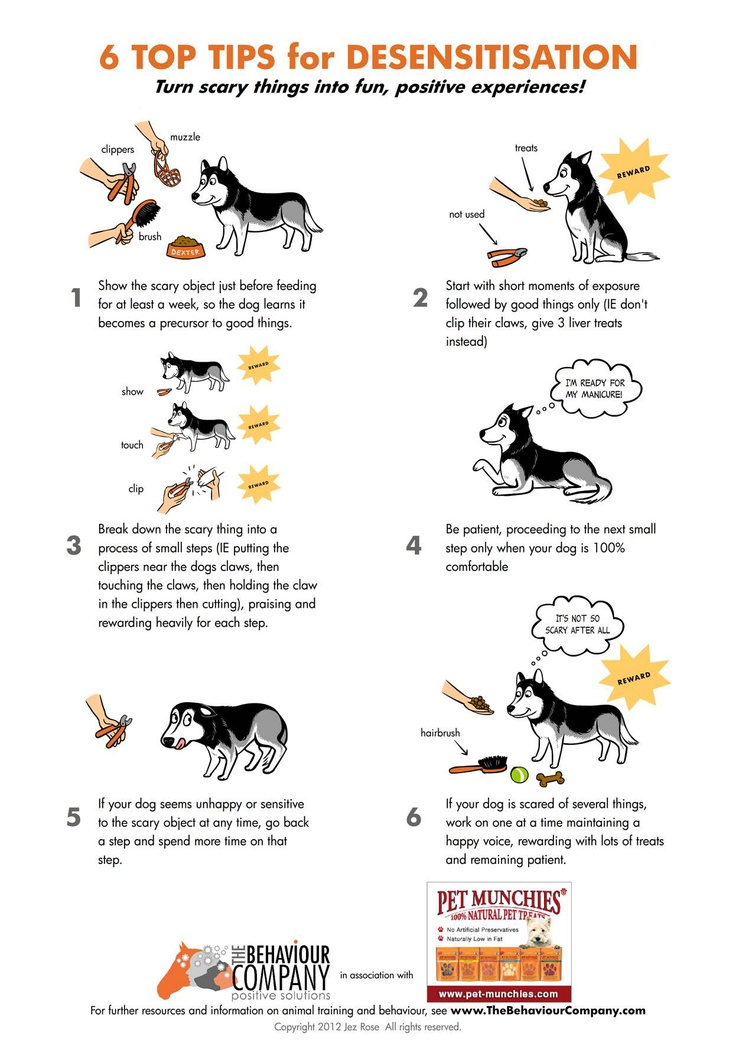how to read cat behavior