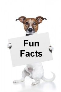 100 Fun Facts About Dogs