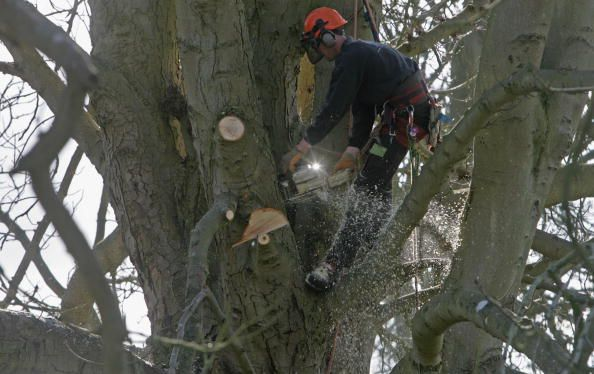 Cheap Timber Prices For Portable Sawmill Owners: Cheap Timber in Urban Forests