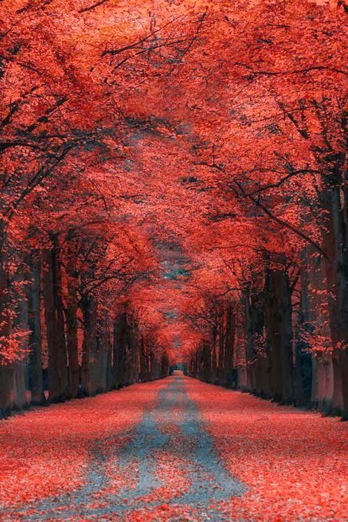 Autumn Lane - Kassel, Germany - Explore the World with Travel Nerd Nici, one Country at a Time. http://travelnerdnici.com/