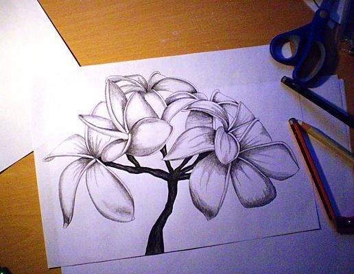 tips for producing realistic colored pencil drawings of flowers