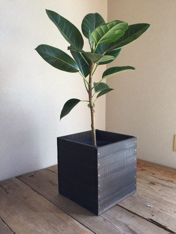 観葉植物 7号鉢用 鉢カバー 焼杉風|フラワー・リース|fumi|ハンドメイド通販・販売のCreema