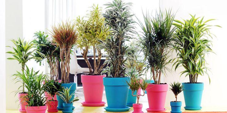 Stralende luchtzuiverende kamerplanten in huis of op kantoor | Praxis Blog