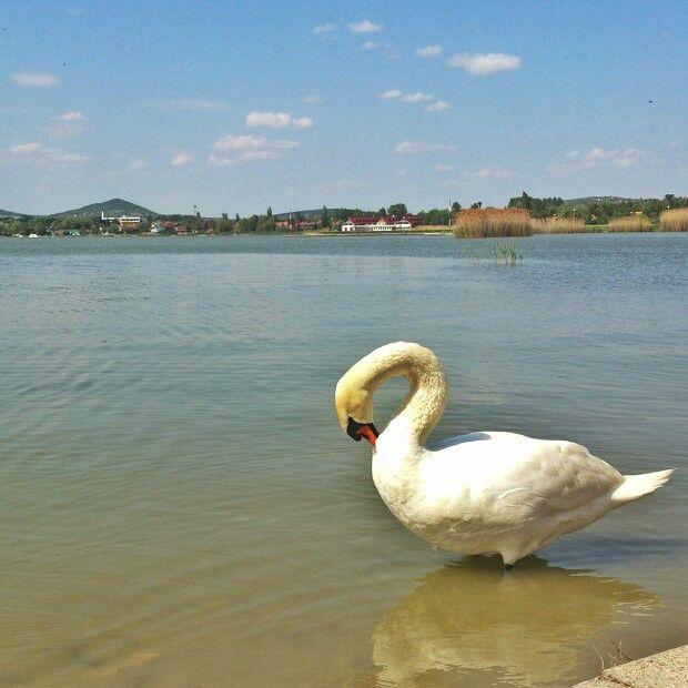 Velencei-tó