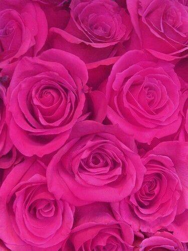 Pretty magenta roses   Bonitas rosas rosadas #pink ✿⊱⊱✿⊱╮