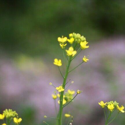 Yellow flowers #macro-photos