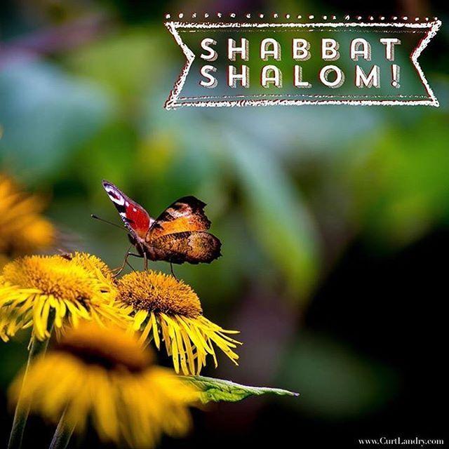Shabbat Shalom!