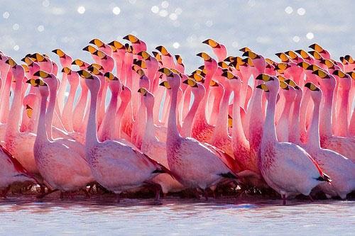 Beautiful Pink Flamingos Photo