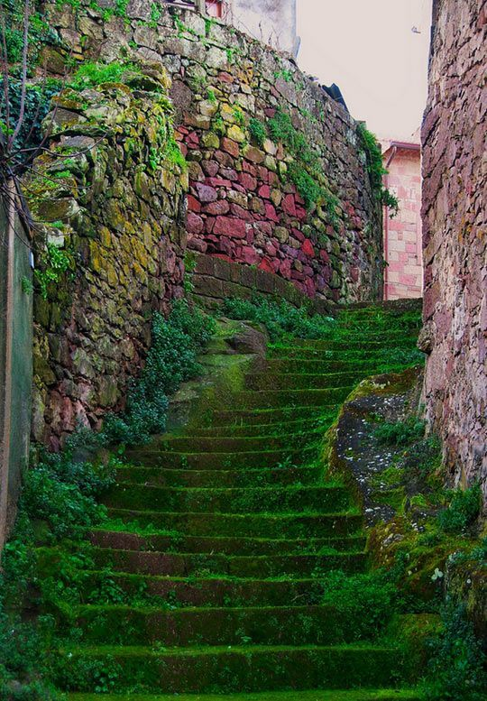 Moss Stairs, Sardinia, Italy photo via patricia