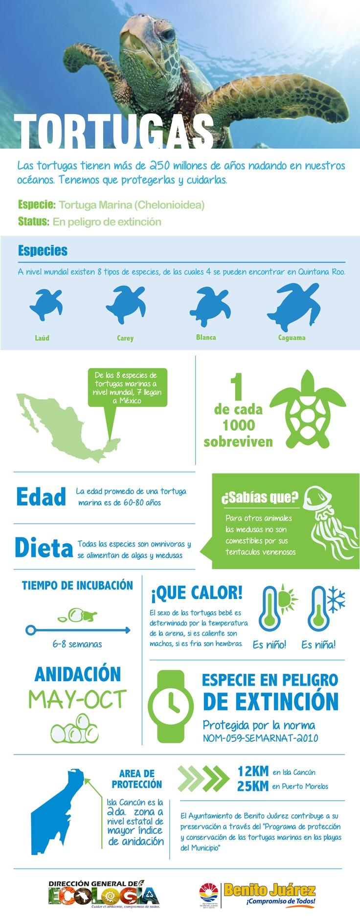 Infografía Tortugas Marinas