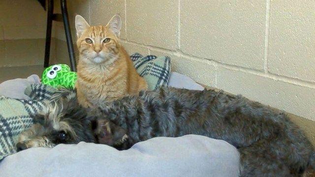 Cat Smelling New Cats Litter Cats Sharing Litter Box