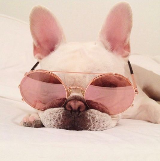 """Magnifique y Tres, Tres Chic"", French Bulldog in Rose Colored Glasses."