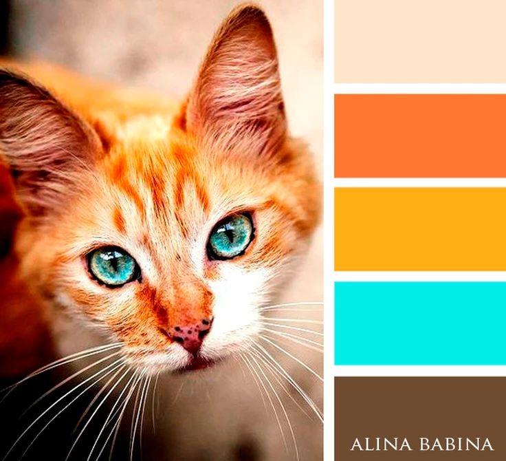 Картинки палитра цветов животные