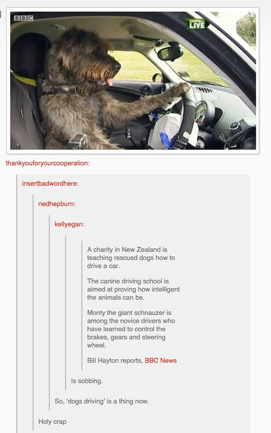 And they teach dogs how to drive cars. Because New Zealand.