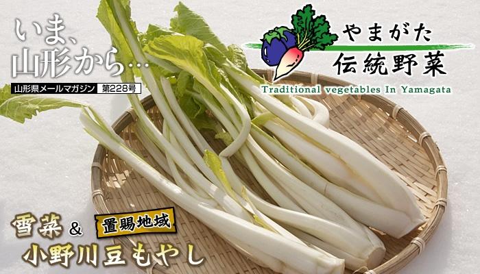 山形伝統野菜「雪菜」