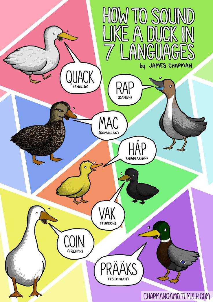How to sound like a duck in 7 languages Apparently in Denmark, Kanye and Jay-Z are the greatest quackers alive. Check out my page for more a...