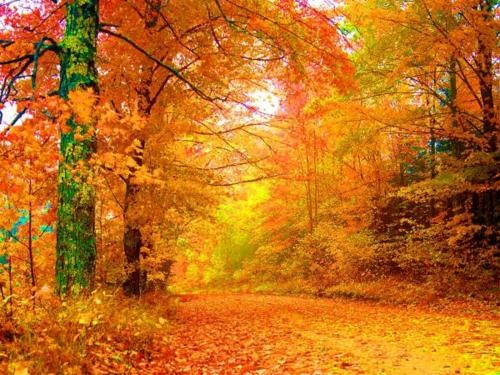 Splashes of Joy — Vermont autumn..