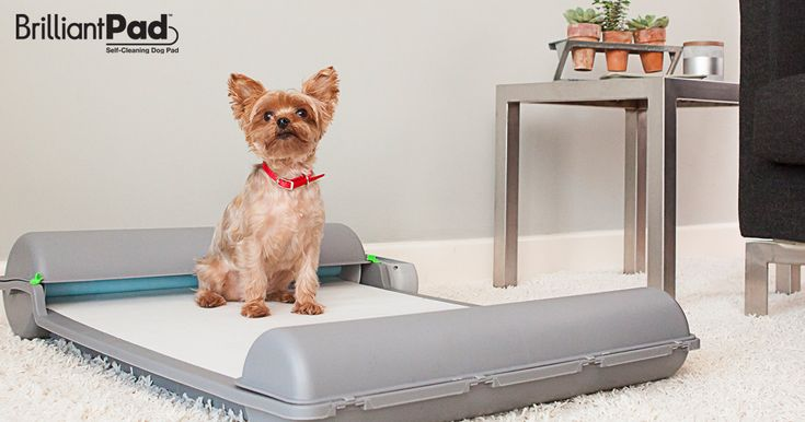 Easy, Clean, Convenient. Automatic, Self-Cleaning Potty System For Puppies and Small Dogs. | Crowdfunding is a democratic way to support the fundraising needs of your community. Make a contribution today!