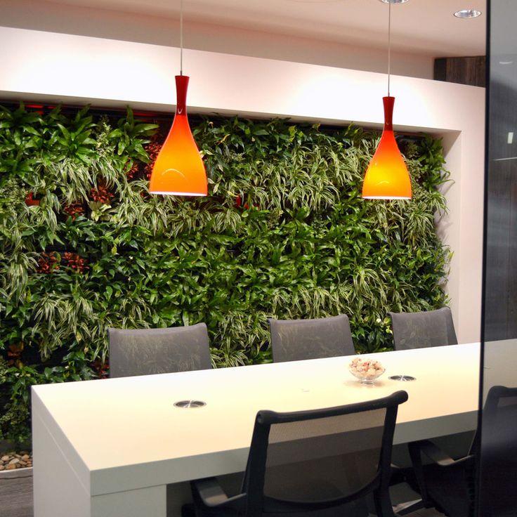 Raumbegrünung, Innenraumbegrünung BAUMHAUS, Pflanzenpflege, Büropflanze, Hydrokultur, interior landscape, zimmerpflanze