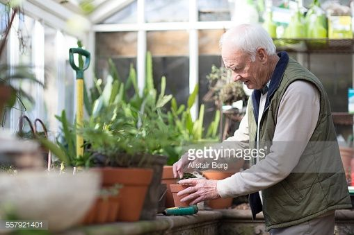 Stock Photo : Senior man working in a greenhouse
