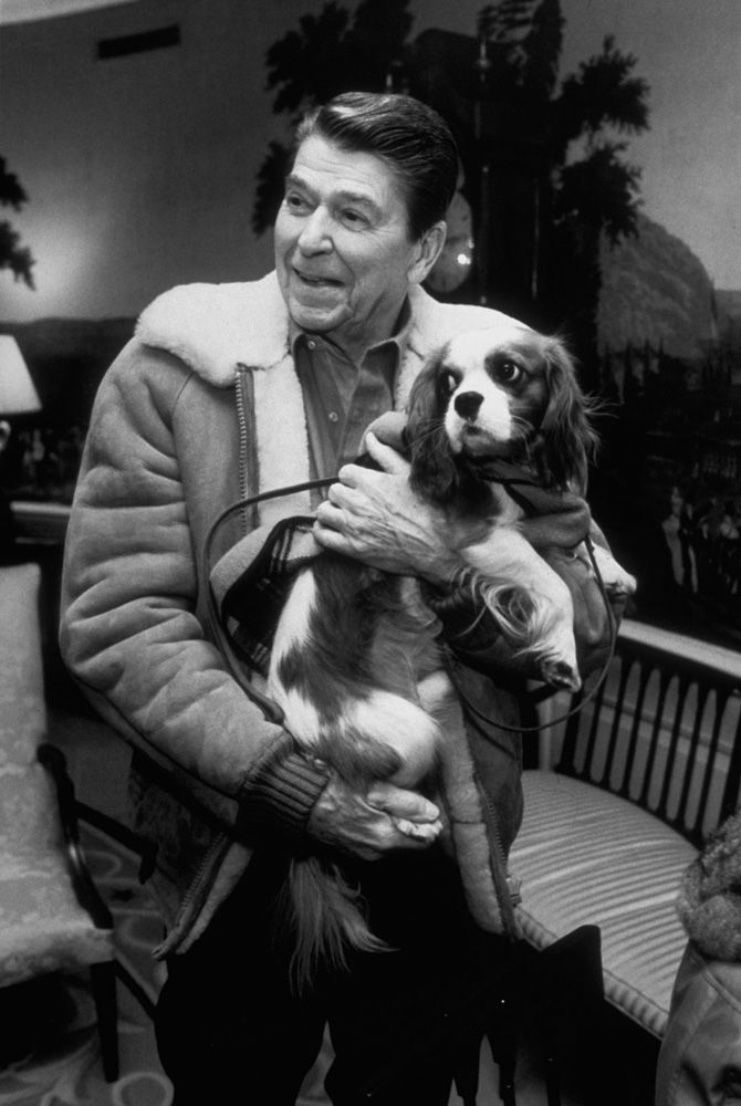 Rex, a King Charles Spaniel, held by former United States president Ronald Reagan.