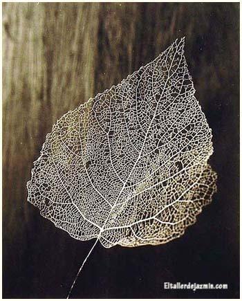 Cómo esqueletizar hojas de plantas y árboles