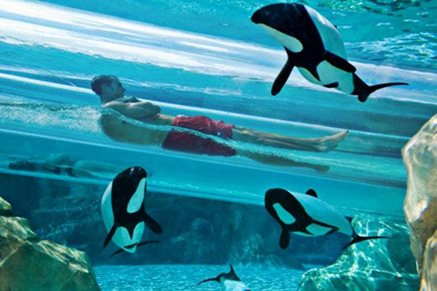 Aquatica: Sea World's Water Park  in Orlando, Florida is on our list of cool water parks to visit! You can even slide through a clear tube and check out dolphins! (Photo: Aquatica)